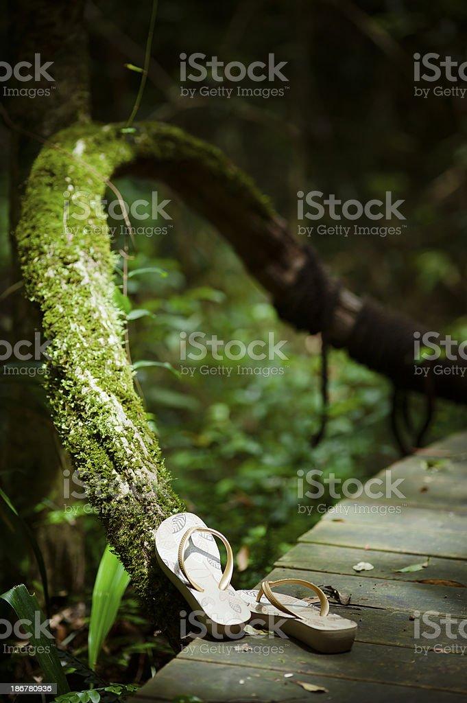Flip-flops Near Mossy Wood stock photo