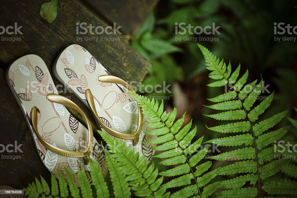 Flip-flops Under Fern Leaves stock photo
