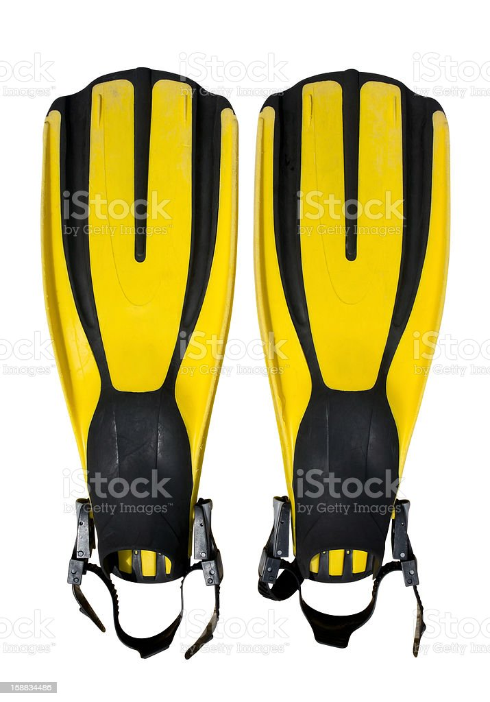 Flippers stock photo