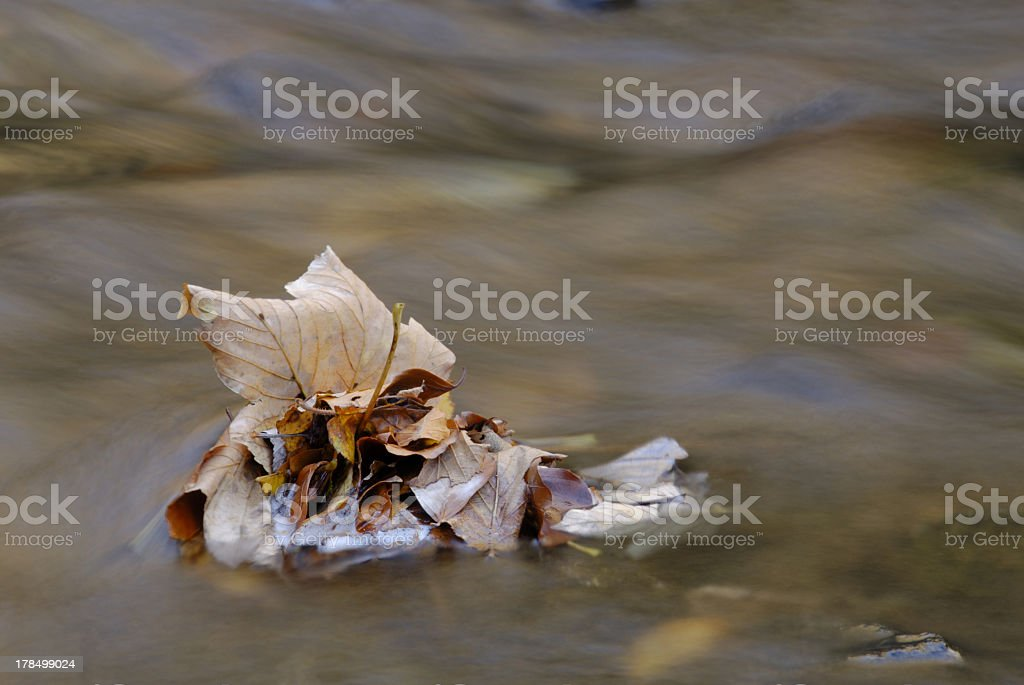 Floating autumn leaves royalty-free stock photo