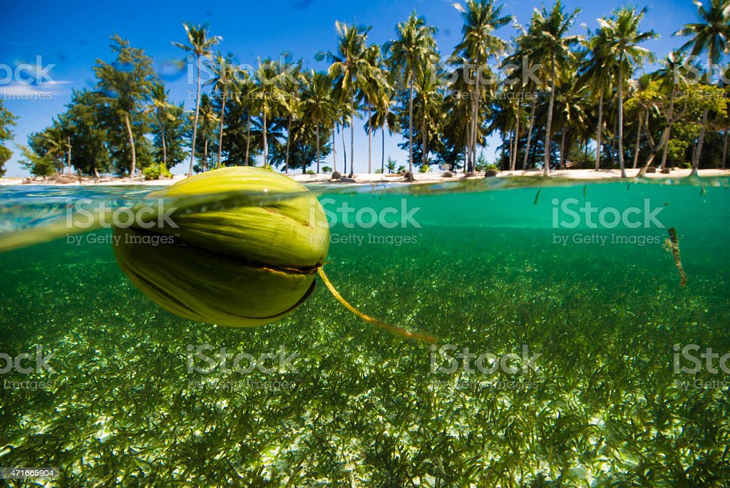 floating coconut crystal clear water kapoposang indonesia scuba diving diver stock photo