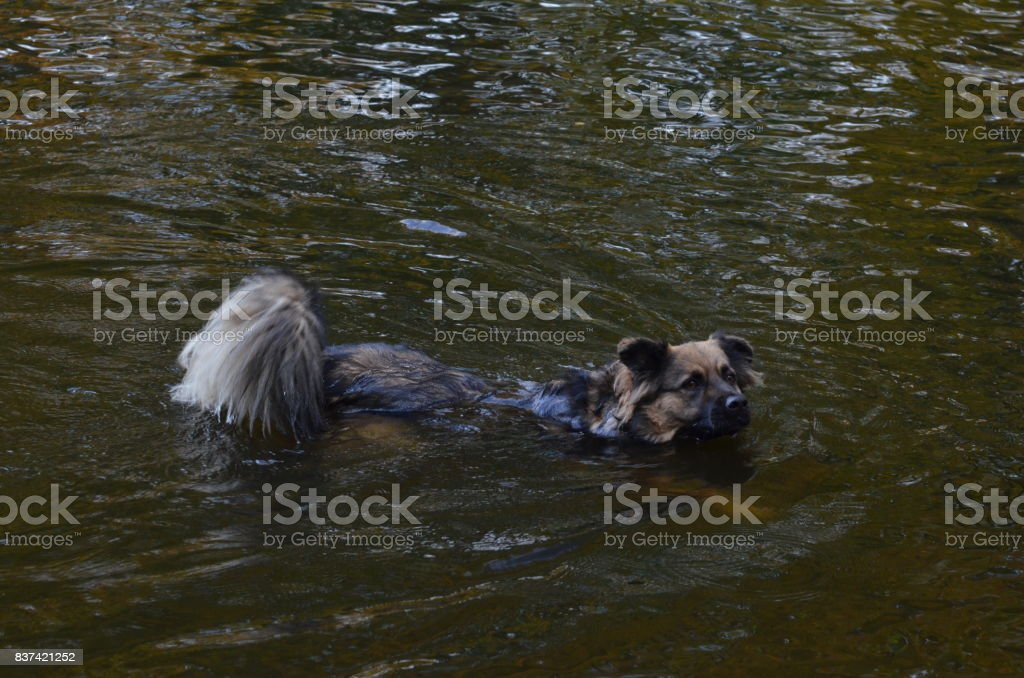 Floating dog in Berlin, Germany stock photo