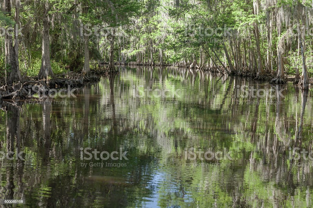 Floating down Shingle Creek stock photo