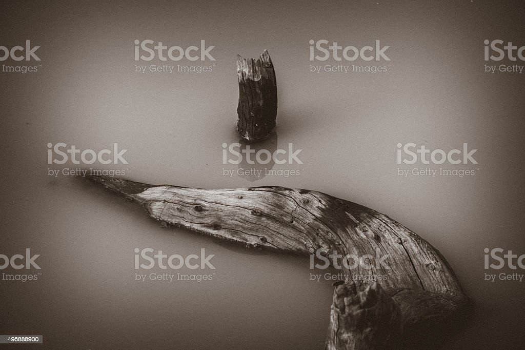Floating dry tree stock photo