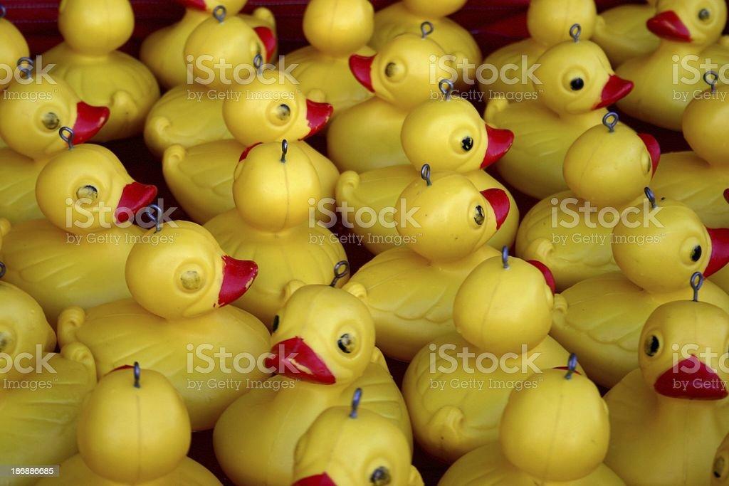 Floating Ducks royalty-free stock photo