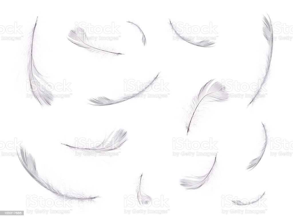 floating feathers stock photo
