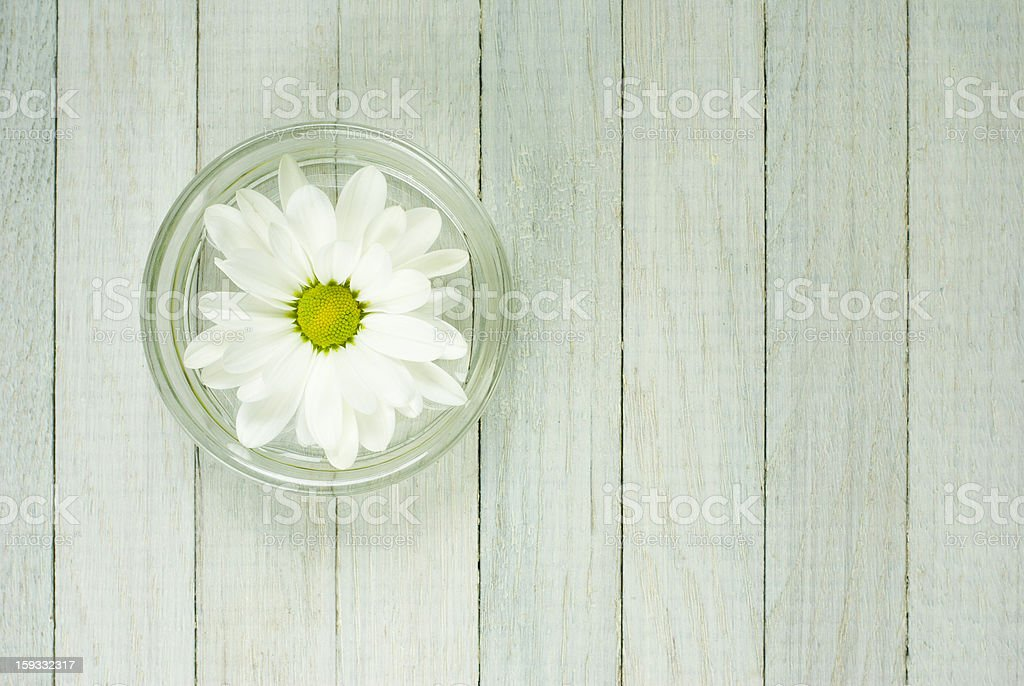 Floating flower royalty-free stock photo