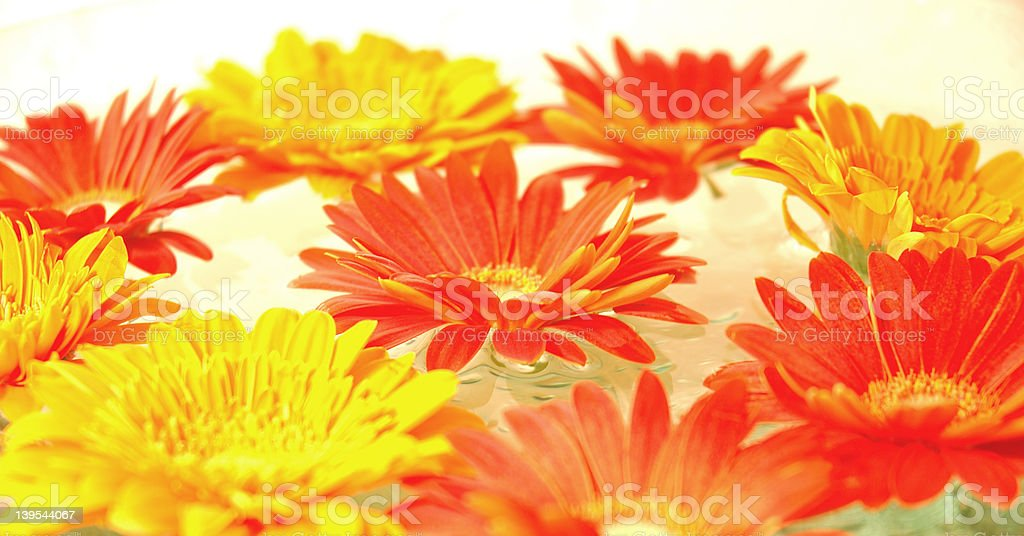floating flowers royalty-free stock photo