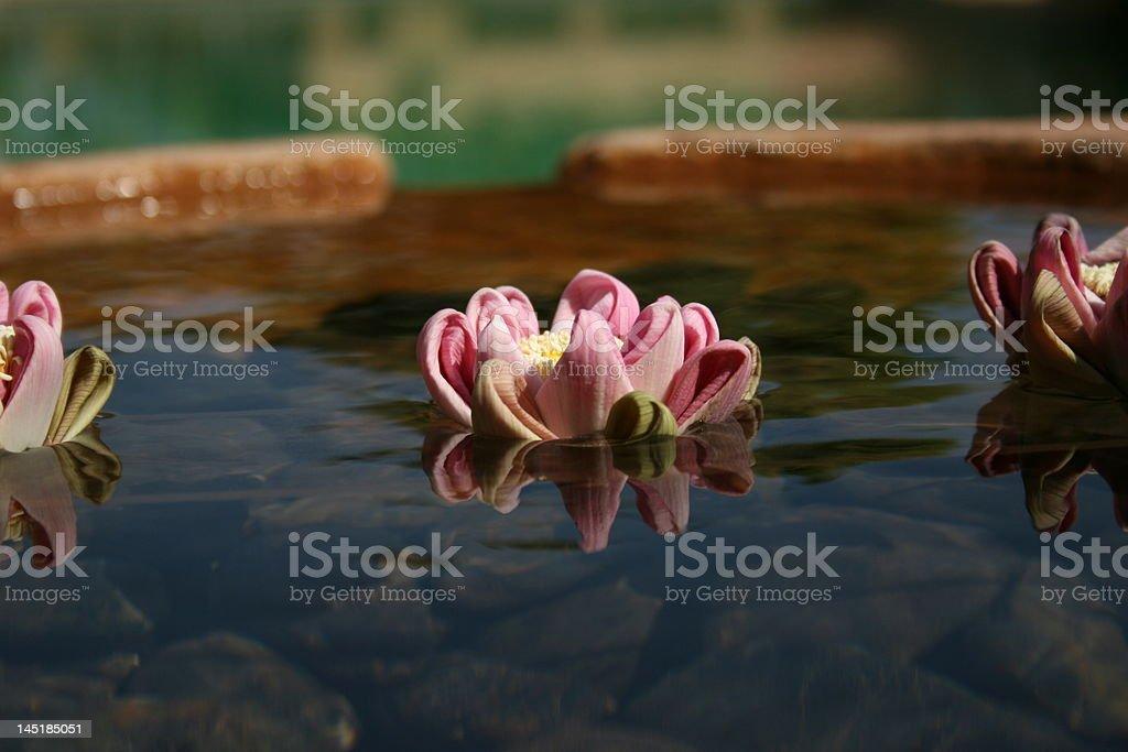 Fiori galleggiante. foto stock royalty-free