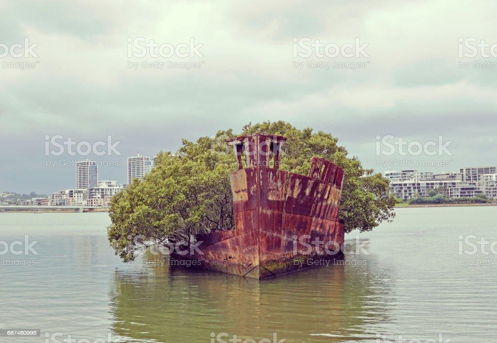 Floating garden shipwreck stock photo