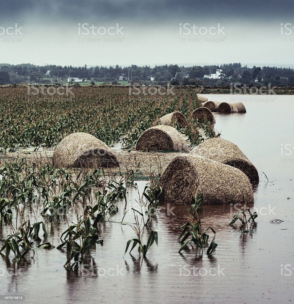 Floating in the Cornfield stock photo