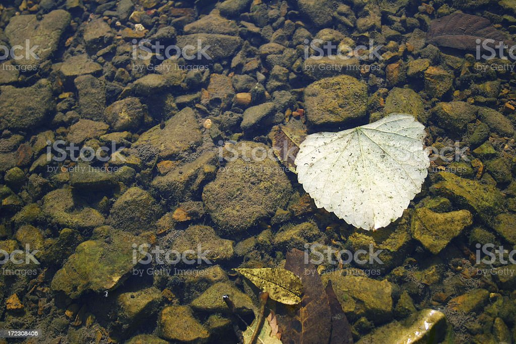 Floating Leaf on River royalty-free stock photo