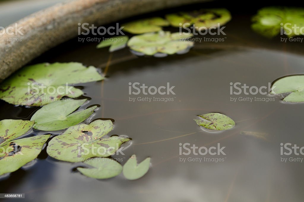 Floating Leaf royalty-free stock photo