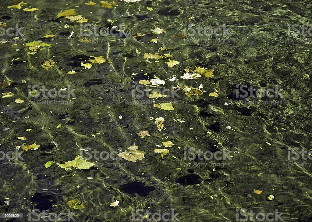 Floating Leaves on a Stony Brook royalty-free stock photo