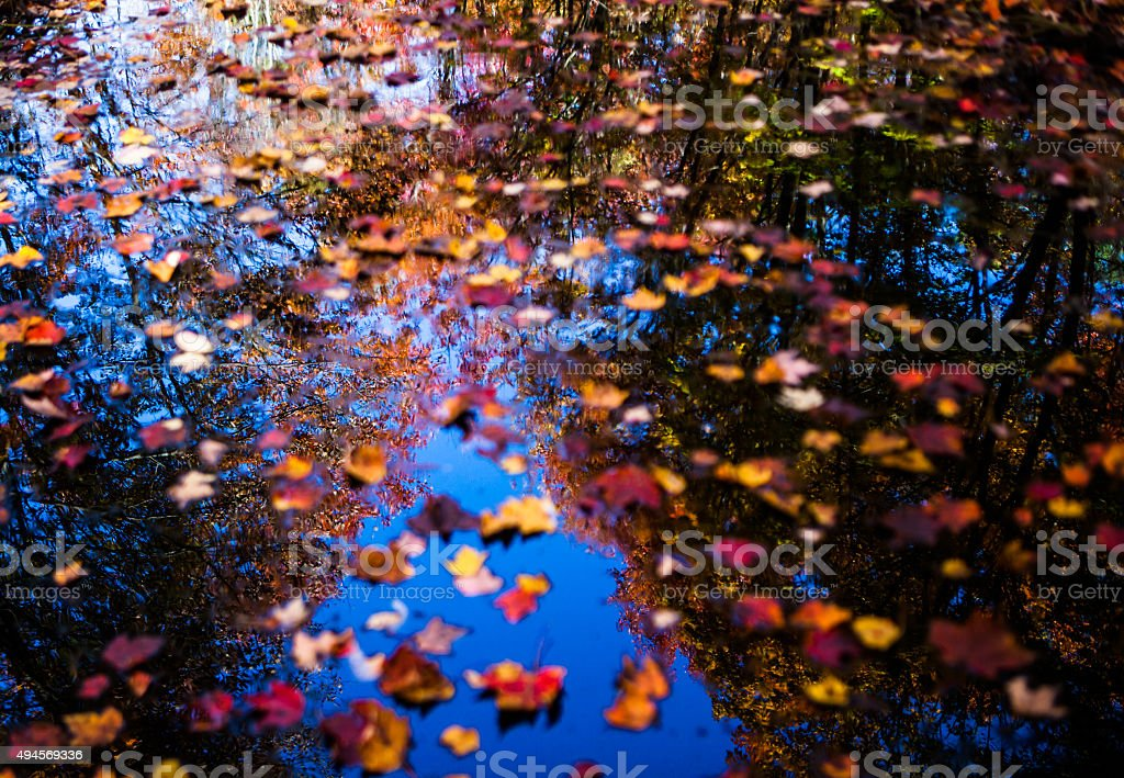 Floating leaves over fall forest reflection stock photo