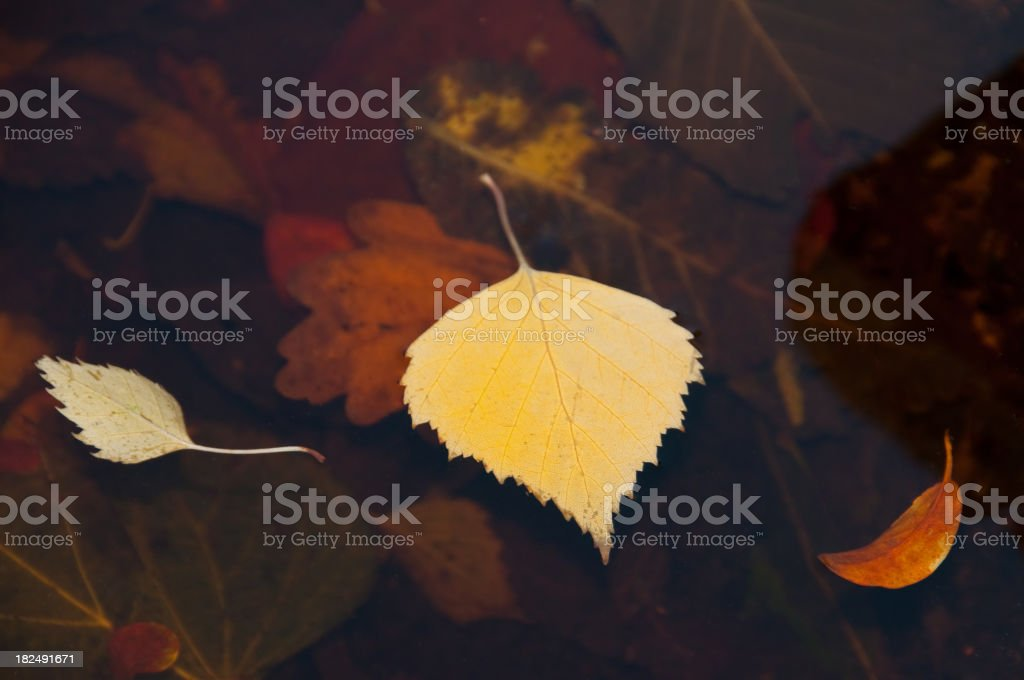 Floating leaves royalty-free stock photo