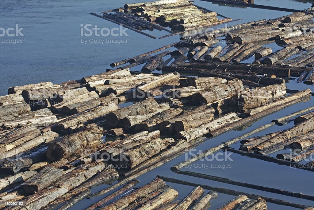 Floating Logs on the Fraser River, Canada stock photo