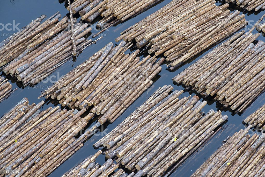 Floating logs stock photo