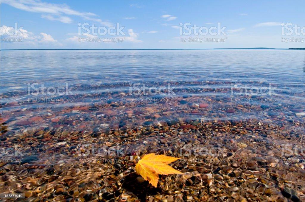 floating maple leaf, Lake Superior stock photo