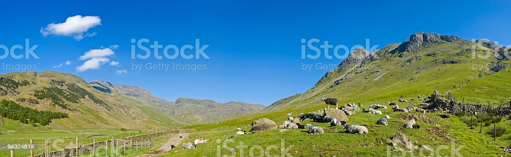 Flock in the valley royalty-free stock photo