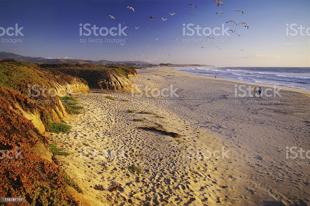Flock of birds above beach, Half Moon Bay, California, USA stock photo