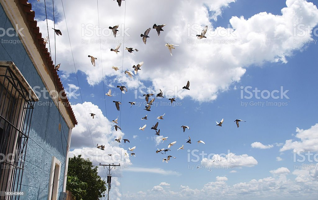 Flock of birds flying off the roof stock photo