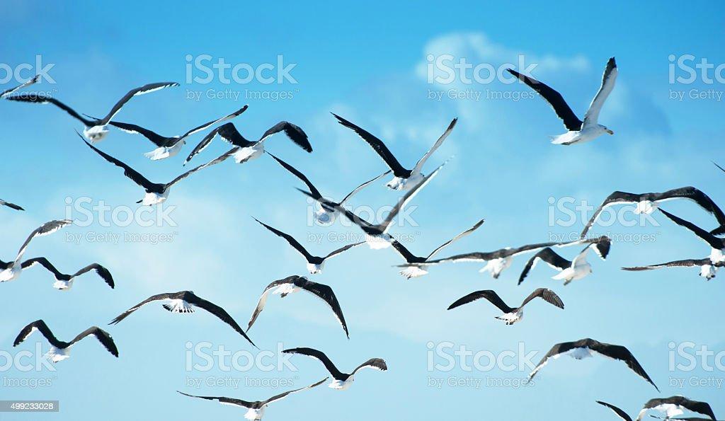 Flock of birds in flight stock photo
