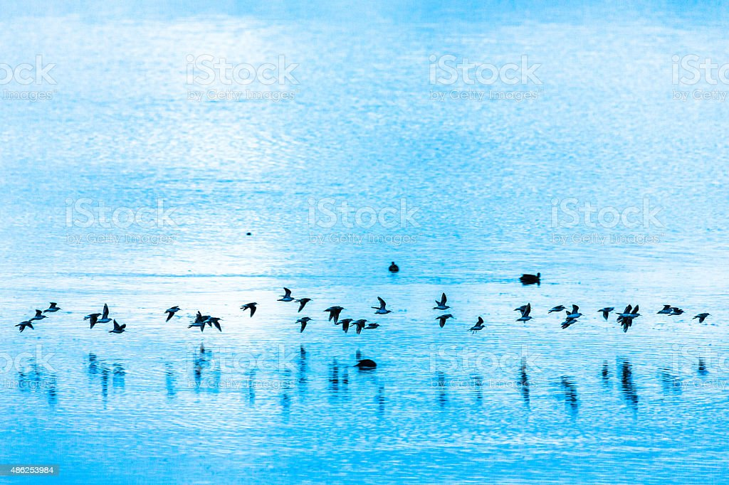 Flock of Birds in the Morning stock photo