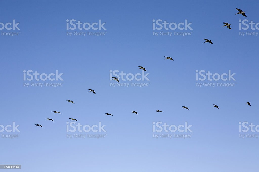Flock of Birds in V Formation royalty-free stock photo