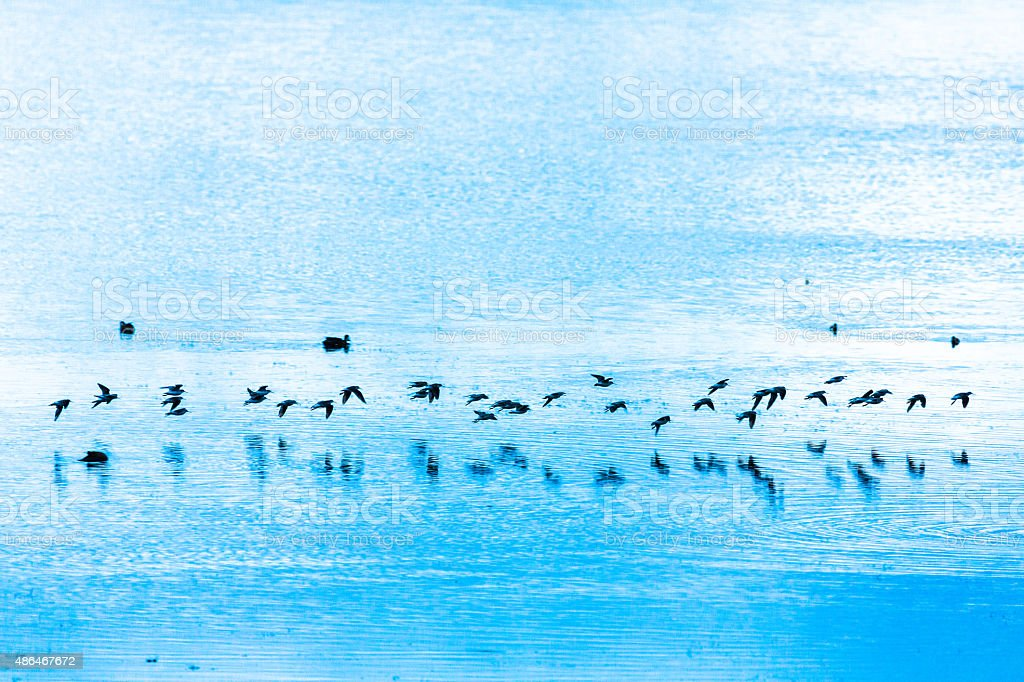Flock of Birds over the Water Surface stock photo