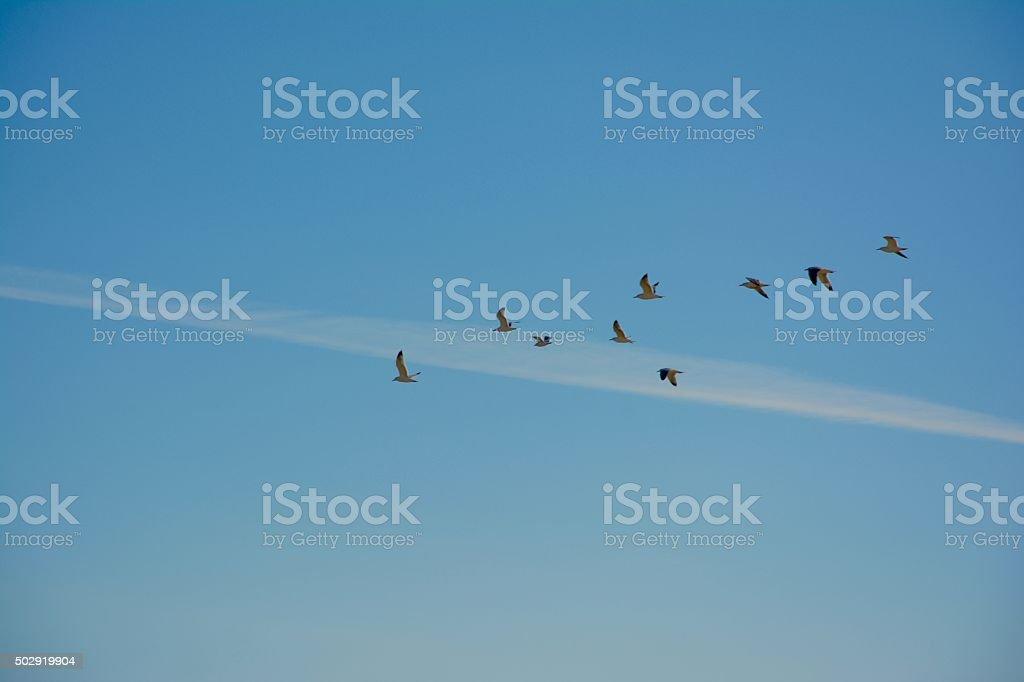 Bandada de pájaros stock photo