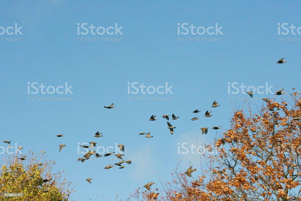 Flock of birds stock photo