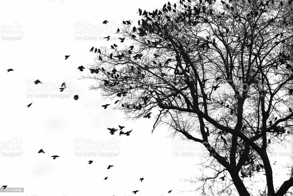 Flock of Contrast stock photo