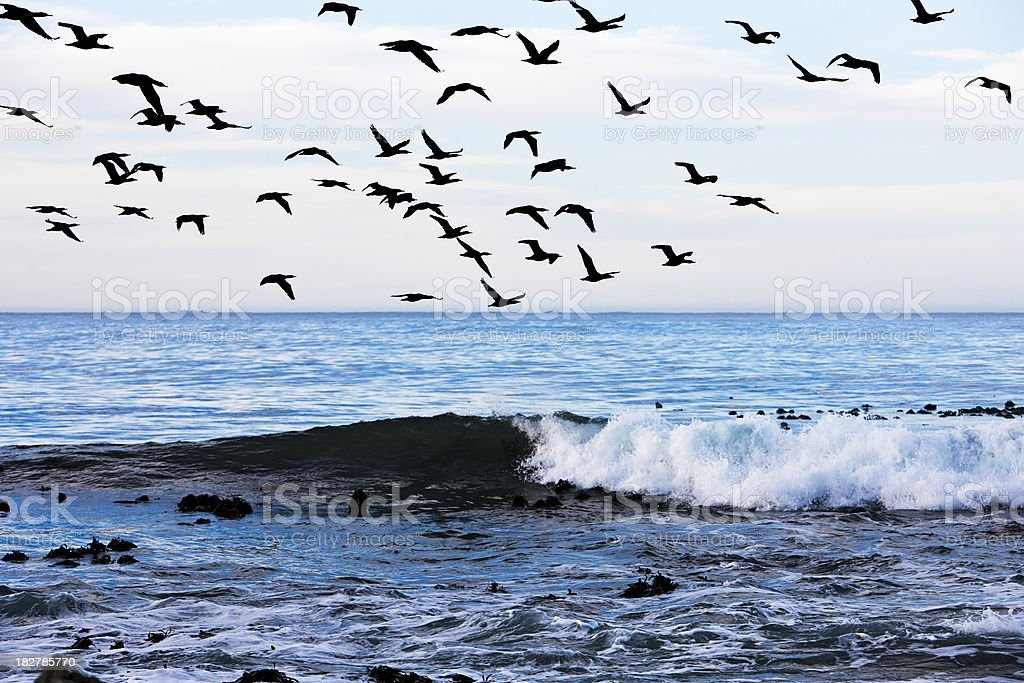 Flock of cormorants flying over the waves royalty-free stock photo