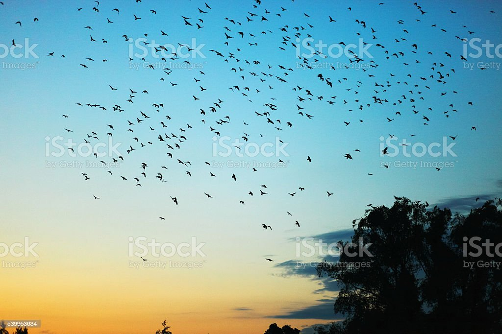 Flock of crows. stock photo