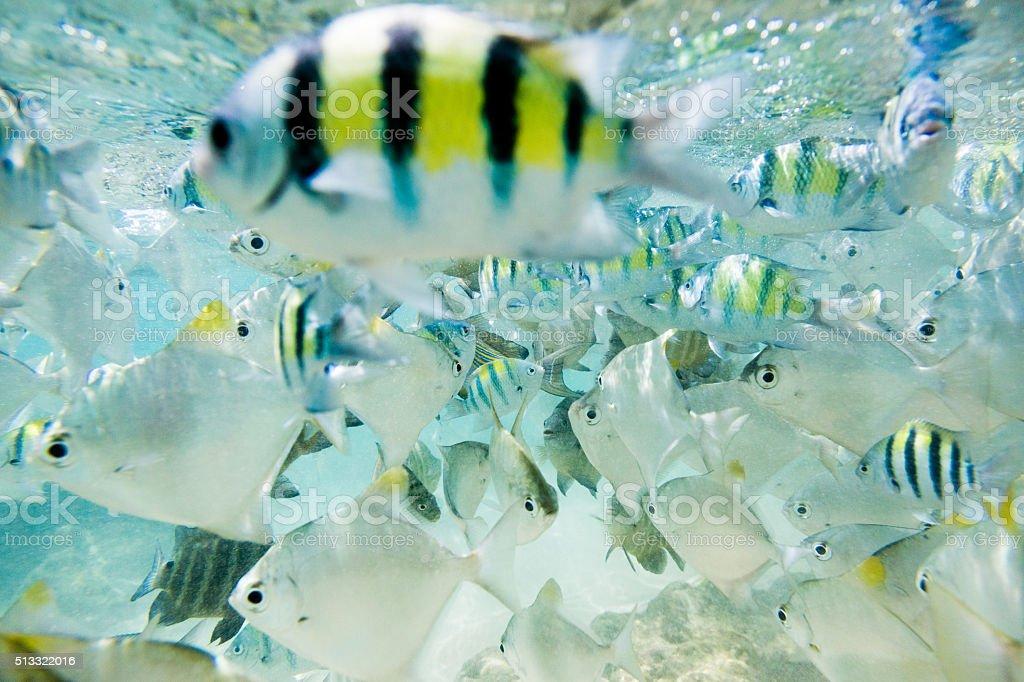Flock of fish stock photo