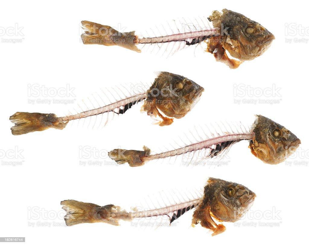 Flock of fish skeletons isolated on white royalty-free stock photo