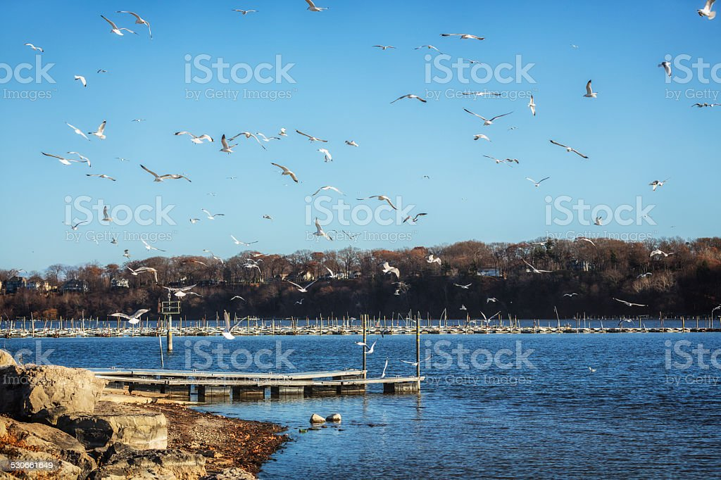Flock Of Flying Seagulls Over Bay Water Marina stock photo