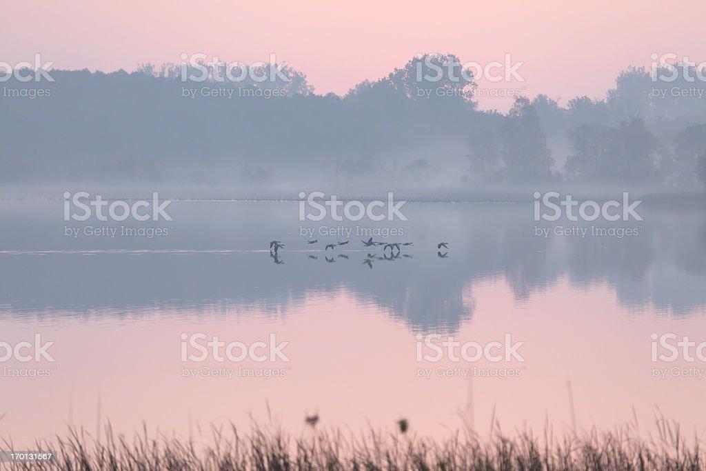 Flock of Goose, Mueritz National Park, Germany royalty-free stock photo