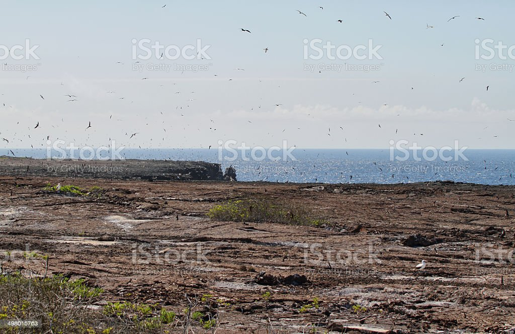 Flock of great Frigate Bird and other birds flying royalty-free stock photo