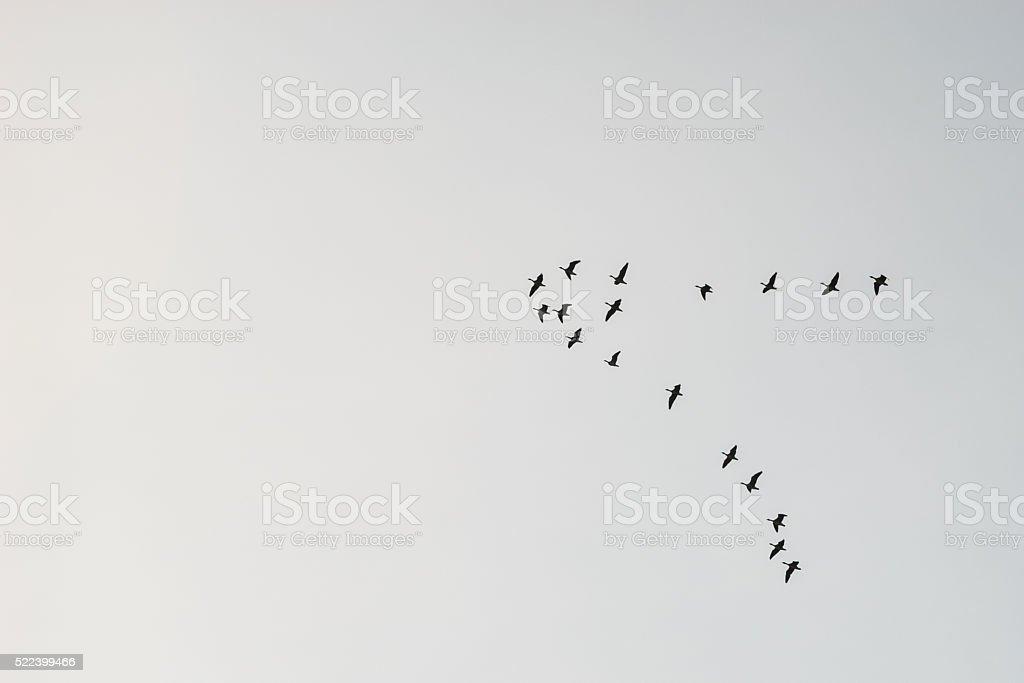 Flock of migrating birds stock photo