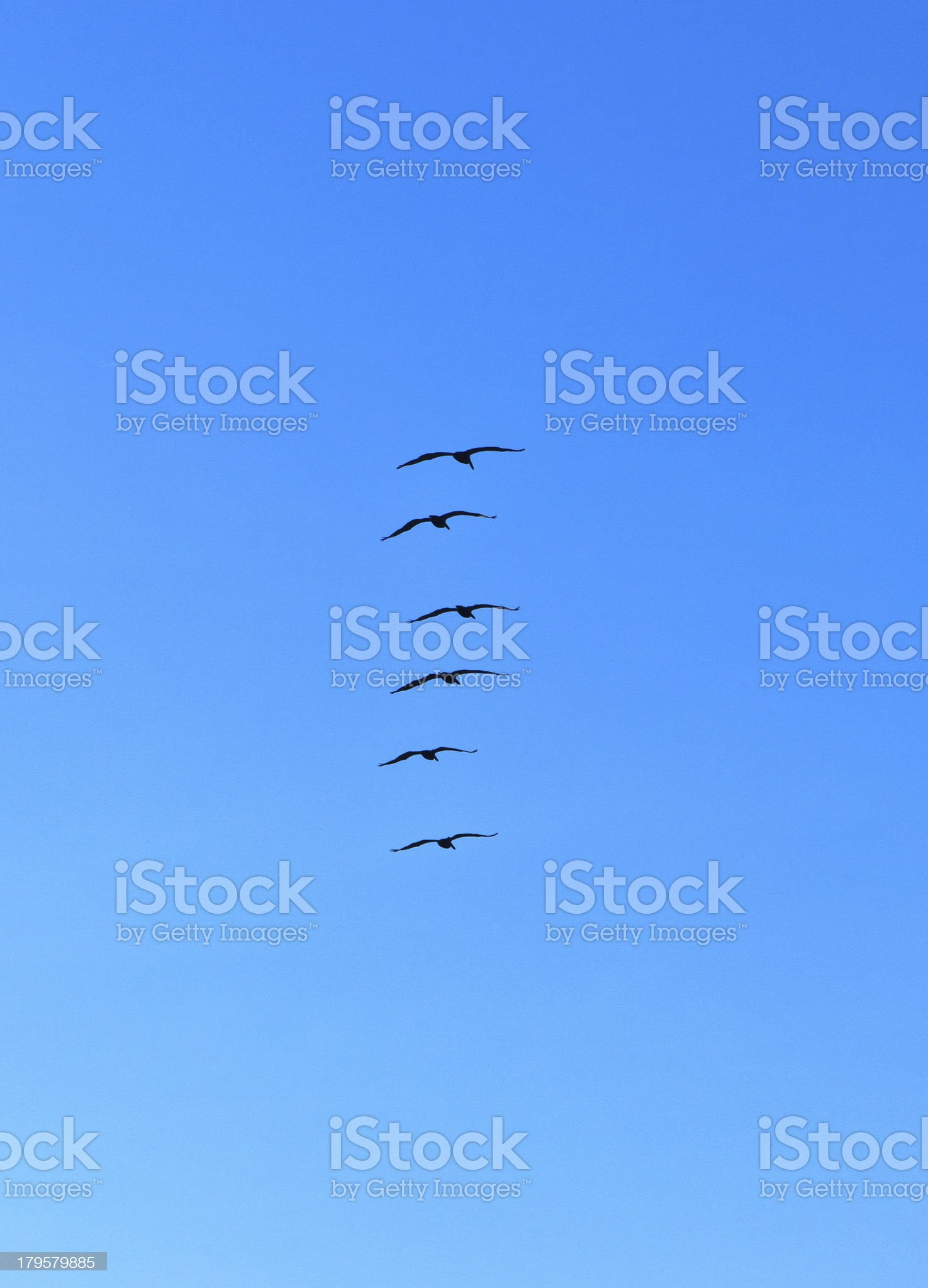 flock of pelicans in the air royalty-free stock photo
