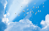flock of pigeons flying in blue sky among clouds