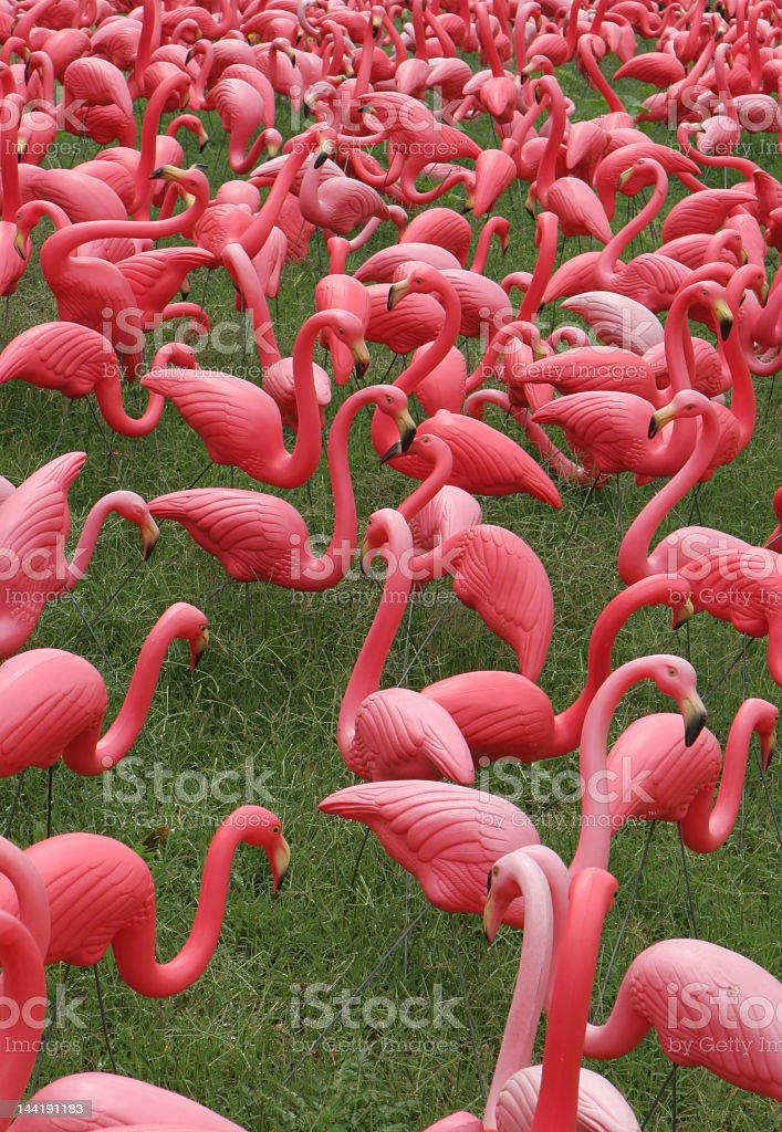 Flock of pink flamingos in grassy field stock photo