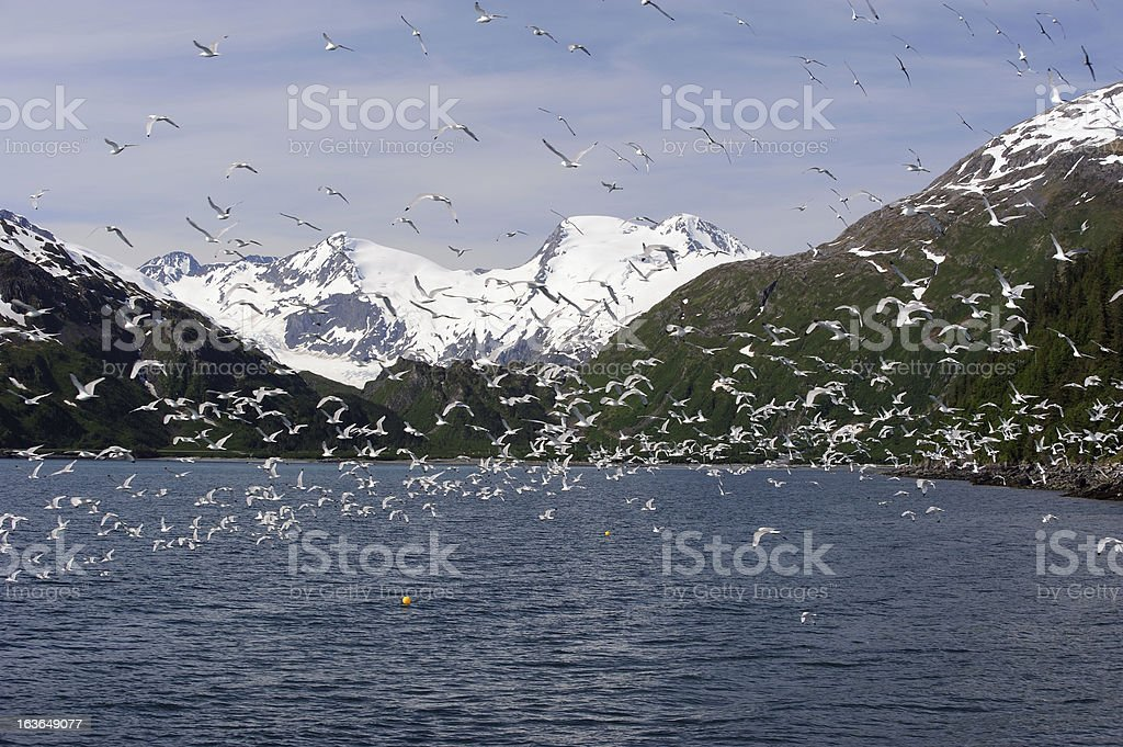 Flock of Seabirds stock photo