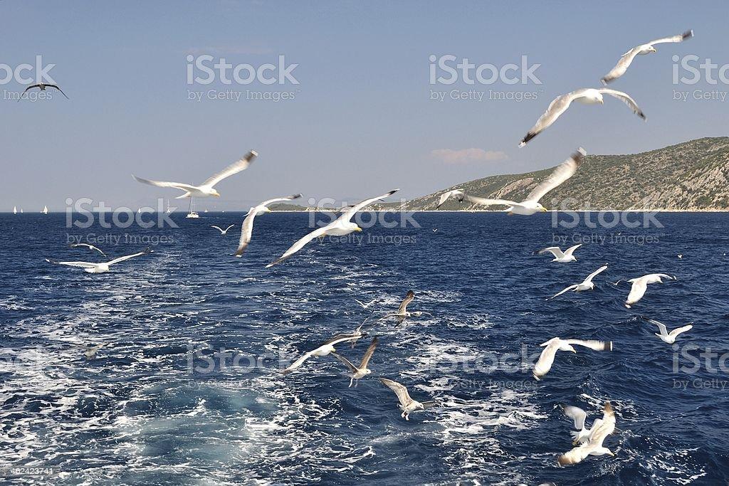 Stado z mewy latający nad morzem zbiór zdjęć royalty-free
