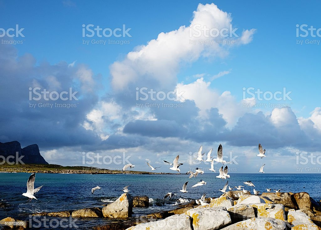 Flock of seagulls flying over the ocean near Cape Point stock photo