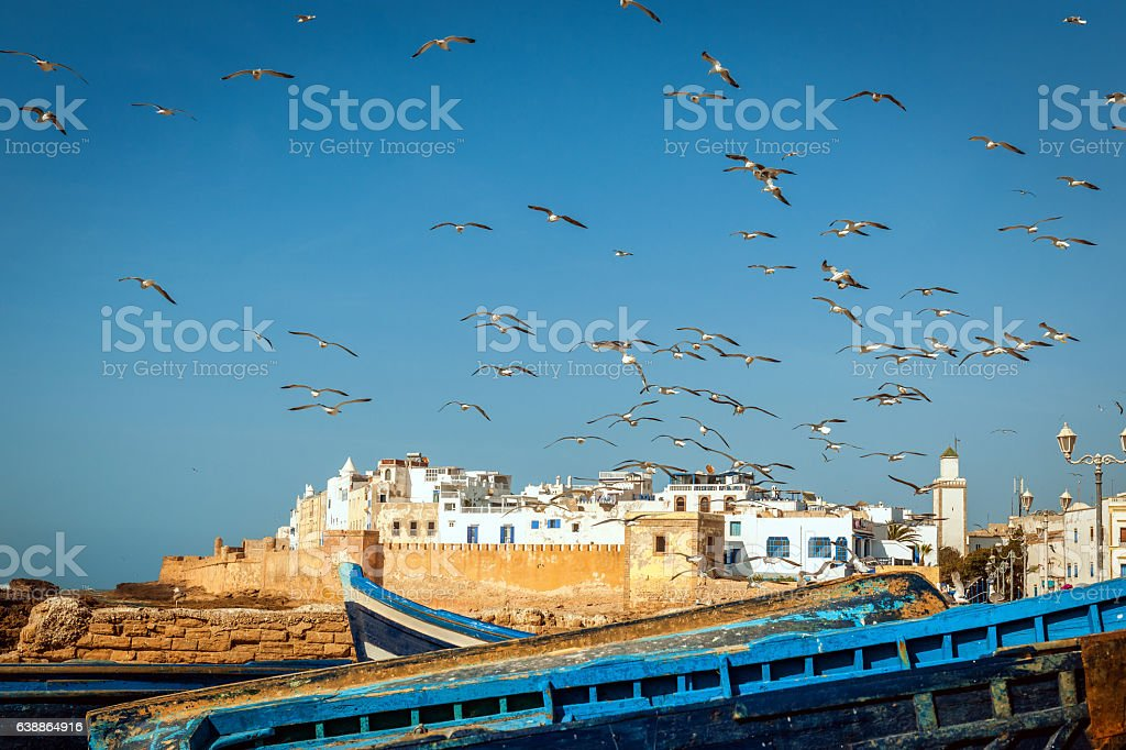 Flock of seagulls over the fishing town Essaouira, Morocco Africa stock photo