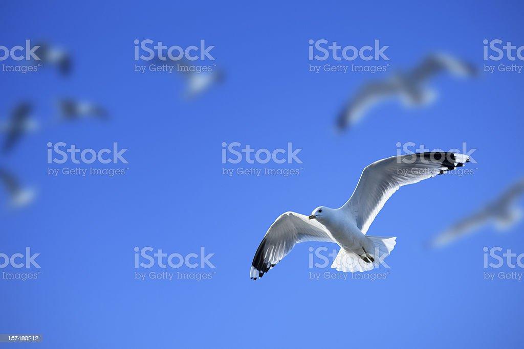 Flock of seagulls stock photo