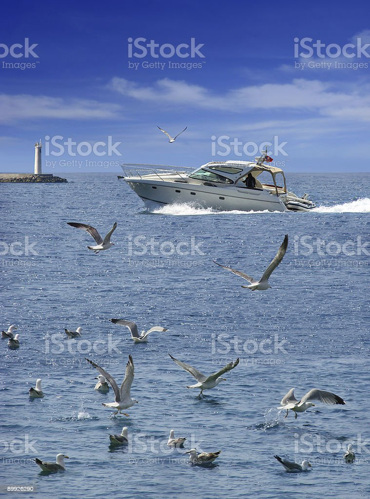 Flock Of Seagulls royalty-free stock photo